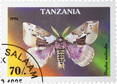 Postage stamp from Tanzania with a moth on a coloured background